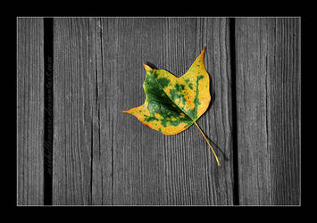 Fallen Leaf by MichelleMarie