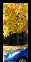 Fall colors by MichelleMarie