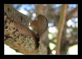 Split bark by MichelleMarie