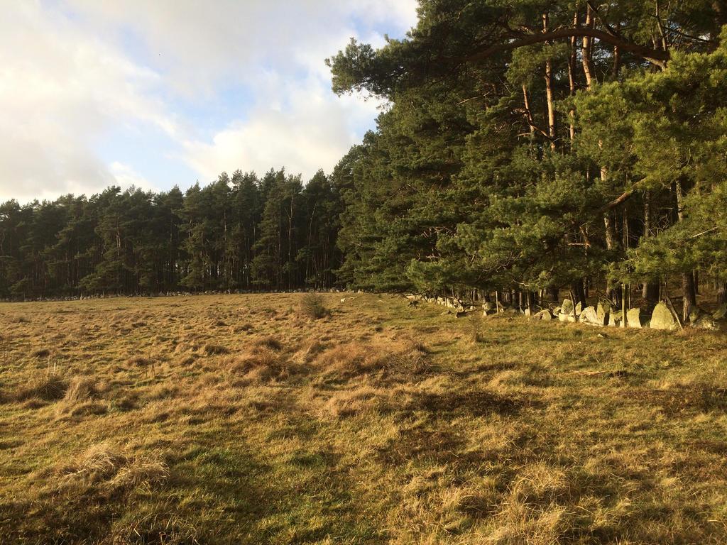 Sweden-Forest by RudyDennis