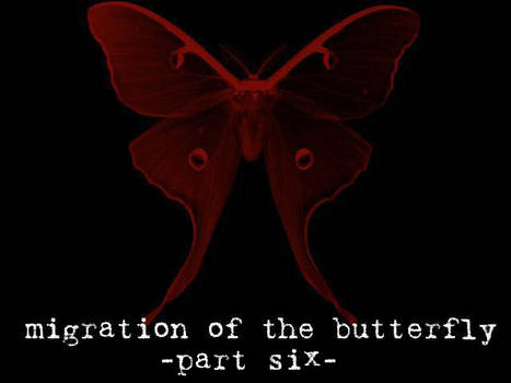 Migration of the Butterfly, 6
