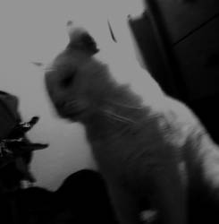 Blurry Face Off by tastybedsore