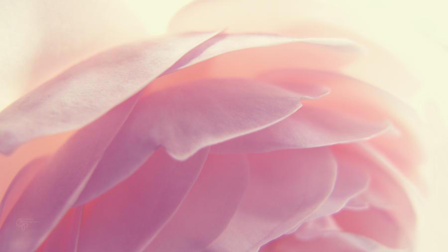 Soft Embrace by DanCrystalis