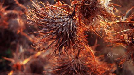 Fickle Grass by DanCrystalis