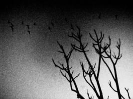 Strange Winds by DanCrystalis