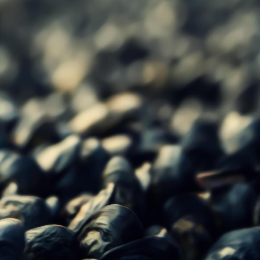 .:Mussels:. by DanCrystalis