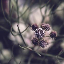 .:Fractal Nature:. by DanCrystalis