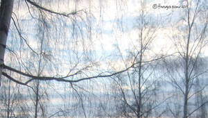 Clouds and Branches 1