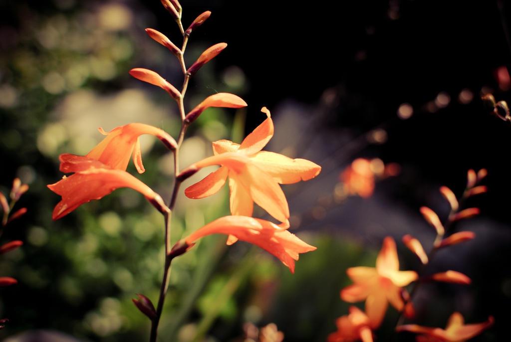 cute flowers by devicry on deviantart, Beautiful flower