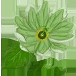 Tsuchi - Earth Flower by DarkShadowsBreedable