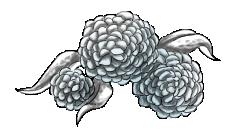 Frost Flowers by DarkShadowsBreedable