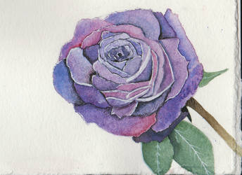 Roses for Judy - Purple by CormorantFeathers