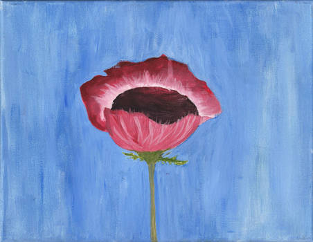 Poppy in the Shade