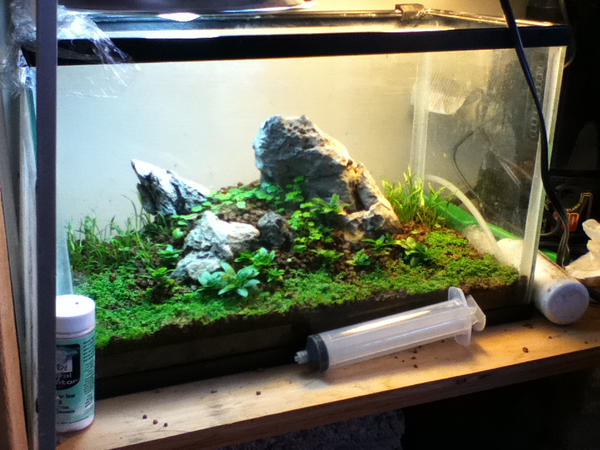 Superb Untitled Nano Aquascape By Aweeby ...