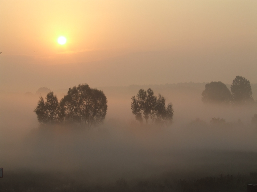 Mist 11 by Nivienne