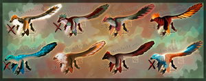 Raptor Adopts|Open|4/8| by RiverBankAdopts