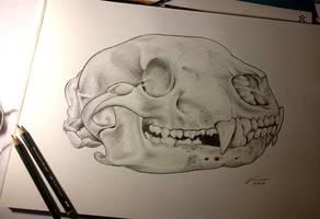 Bear Skull by Gregor1992