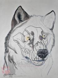'Skully' Adult by NightTracker