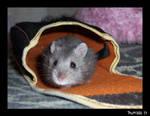 Hamster Series Part 16