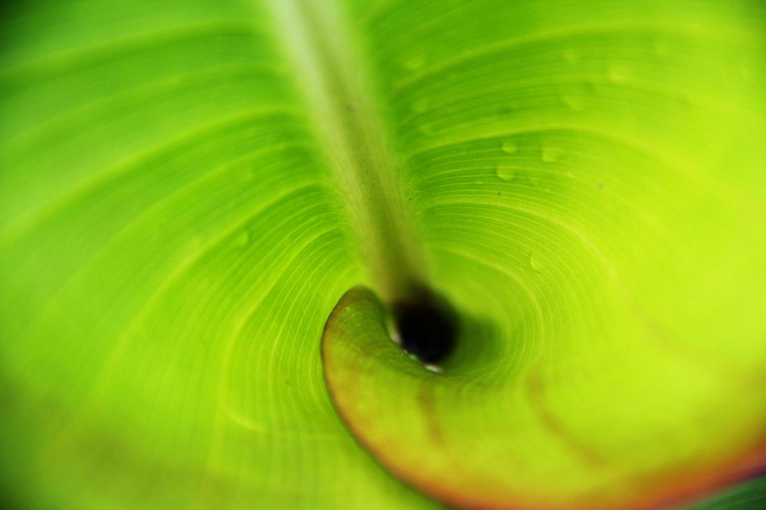 Green Vortex by deliquescing