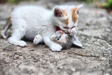 Kitten Stalking 0.6 by ionindigo