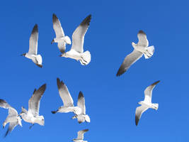 seagulls by bipolargenius