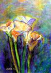 Calla lilies by saraacc