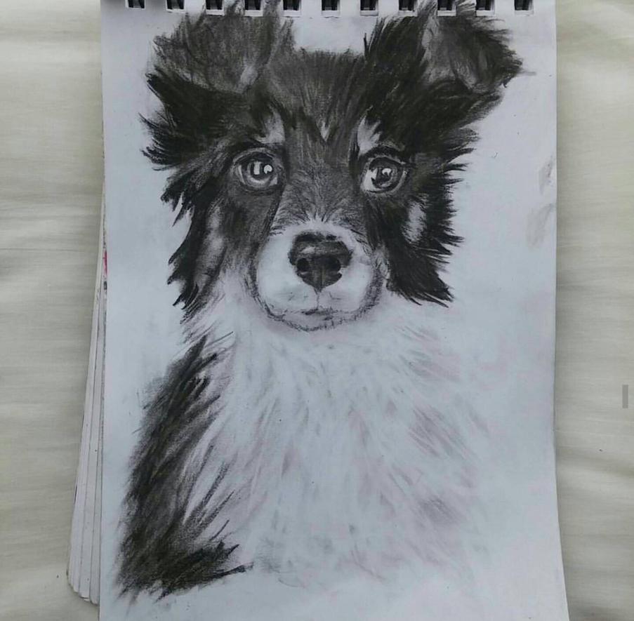 Dog! by e3mwolf