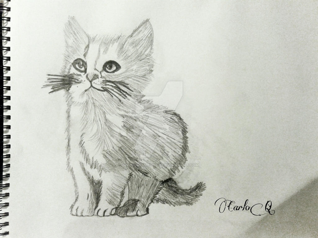 Kitten sketch by snugglesmesilly