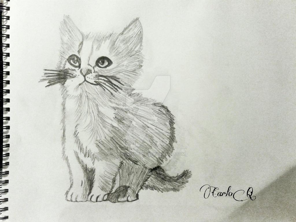 Kitten sketch by snugglesmesilly