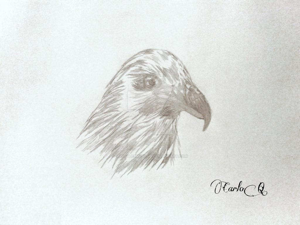 Sketch of Bird by snugglesmesilly