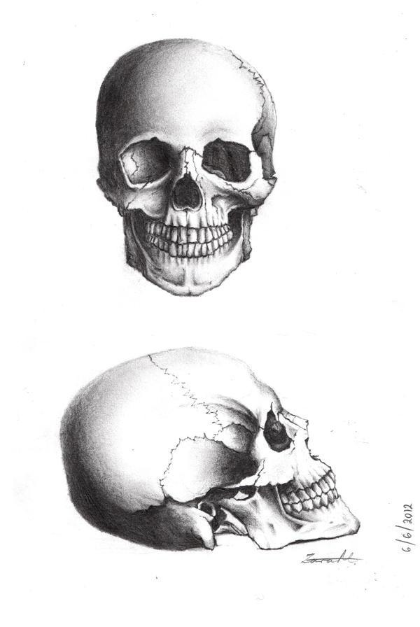 Skulls. by serayph