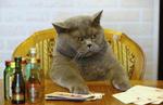 CAT GA GA  - animated - by hetorakelt