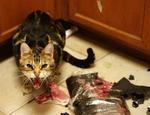 CAT ANGRY   - animated - by hetorakelt