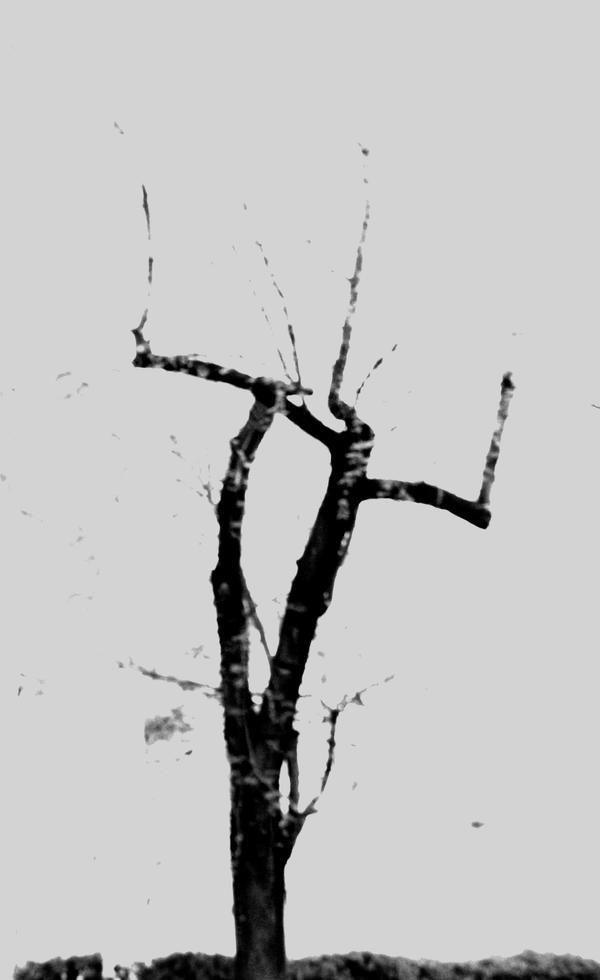 Dead tree by Ealin