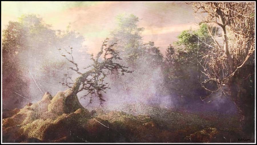 Forgotten Land by Ealin