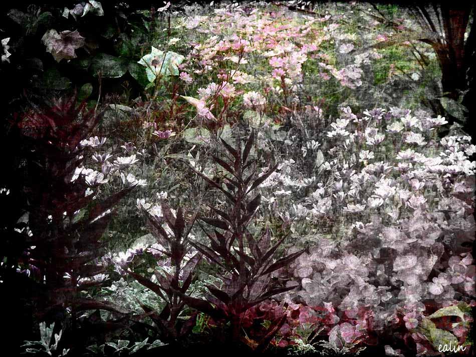 Garden by Ealin