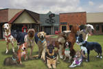 Real-Life Canis Springs Group Shot