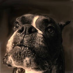 Owen IV - Puppy as Muse by C-Newlin