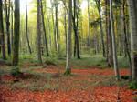 Autumn Forest 16