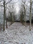 Winter Path 3 by SerapStock