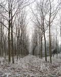 Winter Path 5
