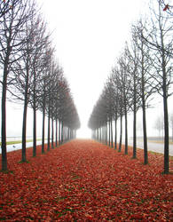 Leaves are Falling..II