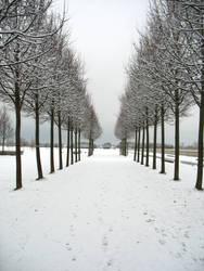 Snowy Morning by SerapStock