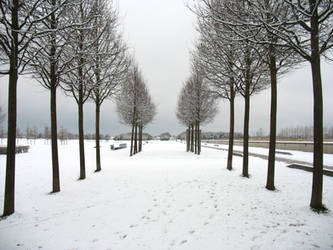 Snowy Morning V