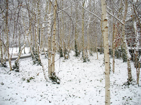 Snowy Path II