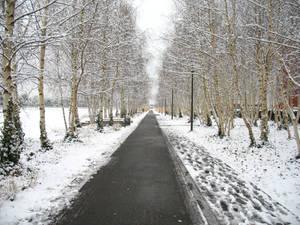 Snowy Path III