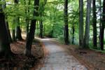 My Path II