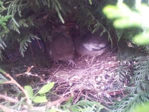 Nest of birds!