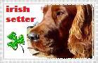 BIG irish setter stamp by Livii-Chann
